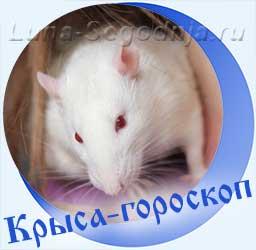Восточный гороскоп Крысы