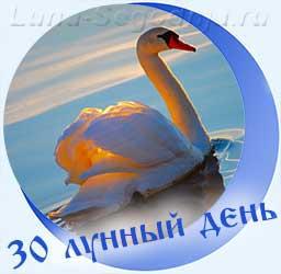 Символ 30-го лунного дня - Золотой лебедь