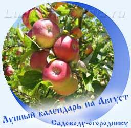 Лунный календарь огородника на Август, яблоня