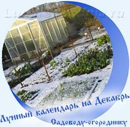Лунный календарь огородника на Декабрь, теплица в снегу