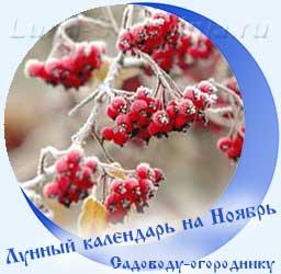 Лунный календарь огородника на Ноябрь, калина в снегу