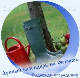 Лунный календарь огородника на октябрь, лейка, сапоги и яблоки