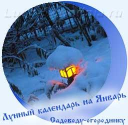 Лунный календарь огородника на Январь - сад в снегу