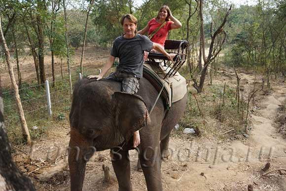 Покатушки на слоне в Тайланде