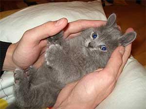 Гороскоп для Кота (Кролика)