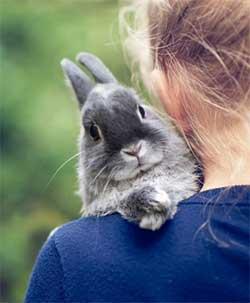 Год Кота (Кролика)