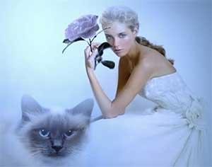 Женщина Кот (Кролик)
