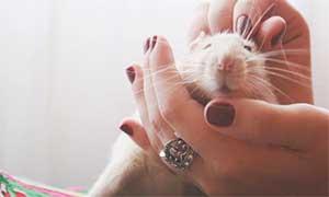 Гороскоп для Крысы