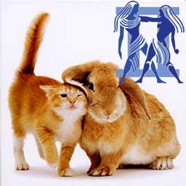 Близнецы-Кот (Кролик) характеристика