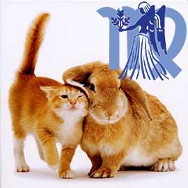 Дева-Кот (Кролик) характеристика