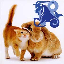 Козерог-Кот (Кролик) характеристика
