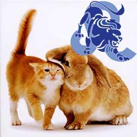 Лев-Кот (Кролик) характеристика
