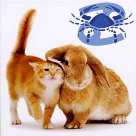 Рак-Кот (Кролик) характеристика