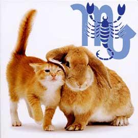 Скорпион-Кот (Кролик) характеристика