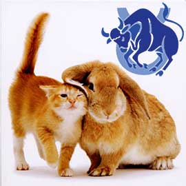 Телец-Кот (Кролик) характеристика