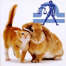 Весы-Кот (Кролик) характеристика