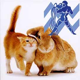 Водолей-Кот (Кролик) характеристика