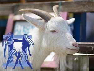 Близнецы-Коза (Овца) характеристика