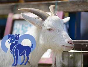 Овен-Коза (Овца) характеристика