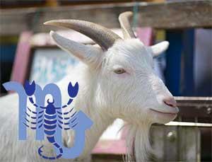Скорпион-Коза (Овца) характеристика