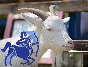 Стрелец-Коза (Овца) характеристика