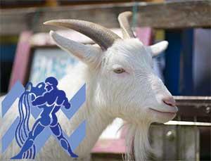 Водолей-Коза (Овца) характеристика