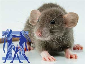 Близнецы-Крыса характеристика