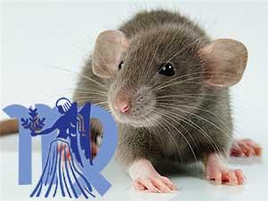 Дева-Крыса характеристика