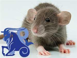 Козерог-Крыса характеристика