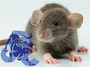 Лев-Крыса характеристика