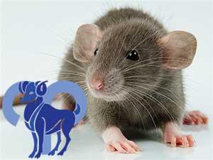 Овен-Крыса характеристика