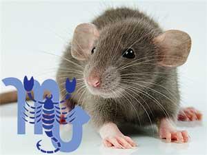 Скорпион-Крыса характеристика