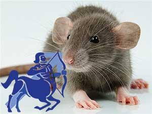 Стрелец-Крыса характеристика
