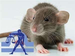 Весы-Крыса характеристика