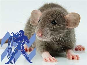 Водолей-Крыса характеристика