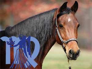 Дева-Лошадь характеристика