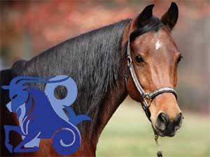 Козерог-Лошадь характеристика