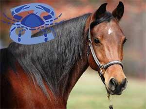 Рак-Лошадь характеристика