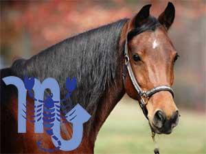 Скорпион-Лошадь характеристика