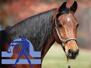 Весы-Лошадь характеристика