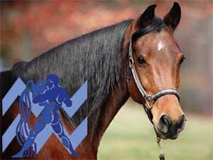 Водолей-Лошадь характеристика
