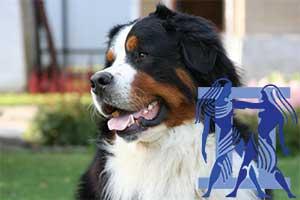 Близнецы-Собака характеристика
