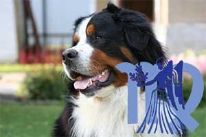 Дева-Собака характеристика