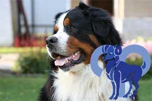 Овен-Собака характеристика