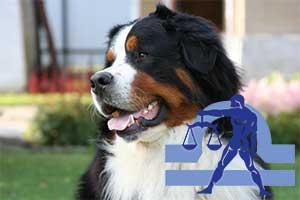 Весы-Собака характеристика