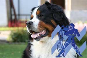 Водолей-Собака характеристика