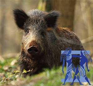 Близнецы-Свинья(Кабан) характеристика