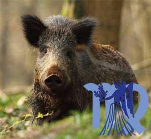 Дева-Свинья(Кабан) характеристика