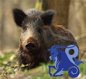 Козерог-Свинья(Кабан) характеристика