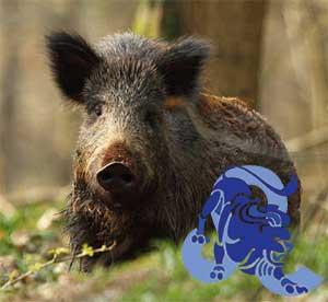 Лев-Свинья(Кабан) характеристика